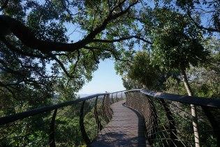 Boomslang - tree canopy walkway