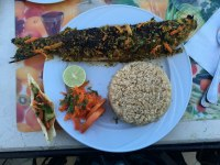 stuffed fish, delicious rice, and a pita filled with veggies and dill